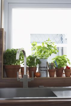 Top Three Powerful Medicinal Herbs You Can Grow Indoors - Health Coach providing personal diet, wellness and nutrition counseling. Schedule a consultation with me today Growing Gardens, Growing Herbs, Indoor Garden, Indoor Plants, Herb Plants, Herb Guide, Healthy Holistic Living, Healthy Living, Herbs Indoors