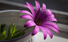 best flower pictures - Google Search
