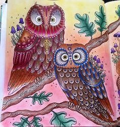 Instagram media wik_coloring - Close-up on the owl mother and father…