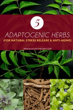 If you ever found yourself wondering: What are adaptogenic herbs and how can you benefit from them? Then you need to read this post and my top 5 list!