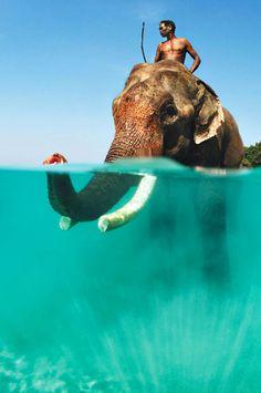 Rajan, the swimming elephant of Havelock Island, Andaman & Nicobar Islands, India
