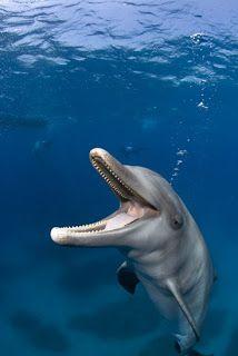 dolphin phtographer-  Stephen Frink