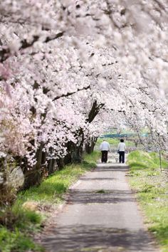 Japanese Interior, Love Always, Cherry Blossoms, Taking Pictures, Color Themes, Road Trips, Interior And Exterior, Country Roads, Beautiful