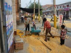 Corn from the streets of Henan.
