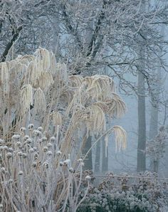 Depth through shapes and textures . (always inspiring landscape designs by Piet Oudolf) Depth through shapes and textures . (always inspiring landscape designs by Piet Oudolf) Winter Szenen, Winter Magic, Winter Time, Winter Plants, Winter Beauty, Ornamental Grasses, Plant Design, Winter Landscape, Belle Photo