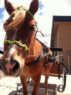 Paracord Bitless Bridle INDIAN HACKAMORE by SimpleLoops on Etsy, $20.00