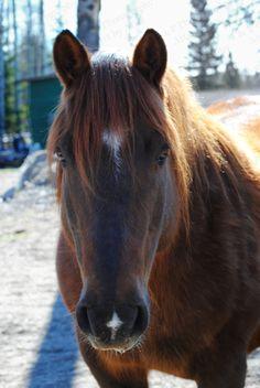 valentine horse names
