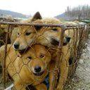 Petition · Corée de Sud : Arrétez de tuer des chiens! (S. Korea : Stop Killing Dogs!) · Change.org