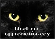 August 17 is Black Cat Appreciation Day Black Cat Appreciation Day, October 27, National Holidays, Celebrities, Cats, Celebs, Gatos, Tax Day Deals, Kitty Cats