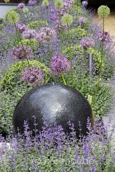 a simple palette of Nepeta, Buxus balls and Allium christophii alliums are so short lived but definitely worth planting! Like the stone ball for year round structure along with the buxus Front Gardens, Small Gardens, Outdoor Gardens, Dream Garden, Garden Art, Side Garden, Garden Beds, Allium Christophii, Purple Garden
