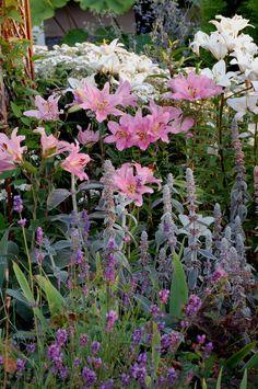 Orientalisk La Reve och vit asiatisk lilja