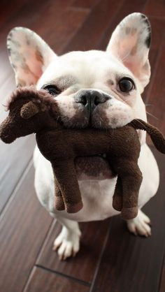 Don't you love it when dogs carry stuffed animals in their mouth?