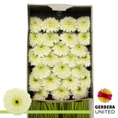 We deliver 5 times per week fresh flowers shipped directly from the farms within hours to your doorstep. We are able to ship from all countries! Gerbera, Create Your Own, Crochet Hats, 50 States, Dutch, Wednesday, Boxes, Delivery, Friday
