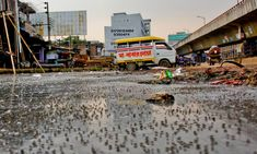 Cities can be dense without being overpopulated. But in the world's most crowded city, the drains can't cope – creating a grim new job Climate Change, Times Square, Earth, Architecture, Street, World, City, Travel, Science
