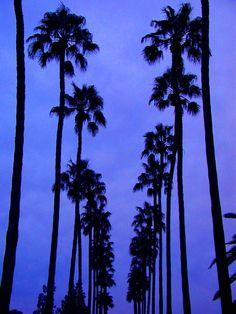 Palm Walk, Arizona State University