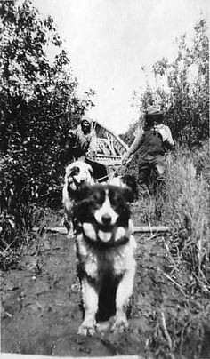 Yukon - Kuskokwim Portage (circa 1922). From the James Gordon Steese Papers. Archives and Special Collections. Dickinson College, Carlisle, PA. Via Flickr.