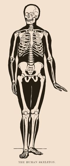Vintage human skeleton drawing from 1898 with a bit of sass. The head is turned and one of the hands is facing outward.