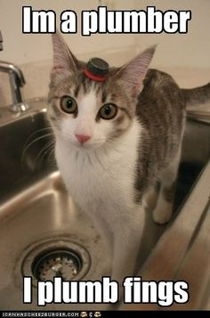22 Best Funny Plumbing Stuff Images Funny Animals Funny Stuff Jokes