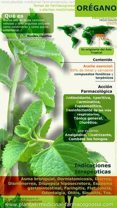 Oregano propiedades. Infografía. Resumen de las características generales del orégano. Usos medicinales más comunes, propiedades y beneficios del orégano.