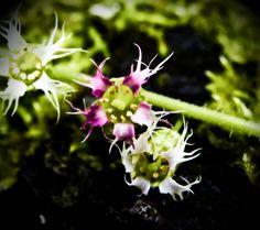 Bloom of the Week Wednesday: Halloween 2012!