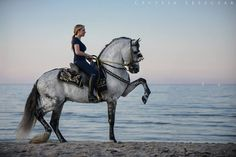 Amazing! Horse on the beach prancing.