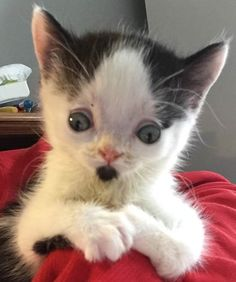 Woman Rescues Kitten Others Gave Up On. Awww...so precious. I'd take it! I'm looking for a kitten. Anyone have one? 6 to 8 weeks old