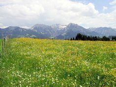 Blumenwiese... by Herzkasper, via Flickr