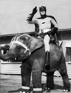 Yes, TV's Adam West in his Batman uniform on an elephant.
