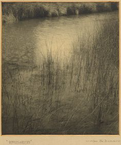 Max Dupain Ripples and Reeds, c.1928