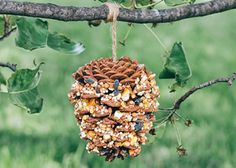 Here's a craft for kids in our new Fall edition of Compassion's children's magazine. It's a bird feeder made with a pinecone, peanut butter and birdseed. Could be a teaching resource to discuss caring for God's creation.