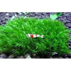 52 best freshwater aquarium images nature aquarium planted