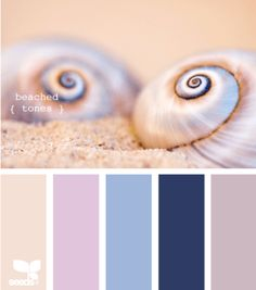 seashell color palette