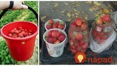Starý a rokmi overený trik, ako zachovať jahody čerstvé na až na 2 týždne: Žiadne mrazenie a chutia bezchybne! Salsa, Strawberry, Mexican, Fruit, Ethnic Recipes, Food, Gardening, Meal, Salsa Music