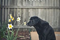 Personal Projects by talisen_cat, via Flickr