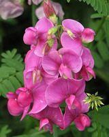 MAGIC-COLORING  Flower templates