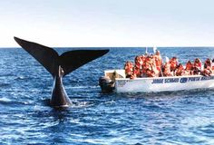 PUERTO MADRYN, wild life -penguins, whales, seals