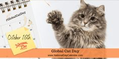 The kids want a kitten. Have you considered adoption over the purr-chase of a furry little friend? Global Cat Day puts the focus on visiting animal shelters first over pet stores. National Sports Day, National Days, Alley Cat Allies, Domestic Cat Breeds, National Day Calendar, Foster Cat, Kitten Rescue, Feral Cats, Make A Donation
