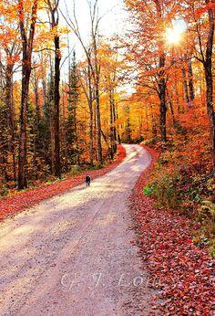 Follow Me  autumn road travel nature fall scenes by finchfieldart, $30.00