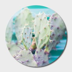Discover «Cactus», Limited Edition Disk Print by Jessica Lia - From $65 - Curioos