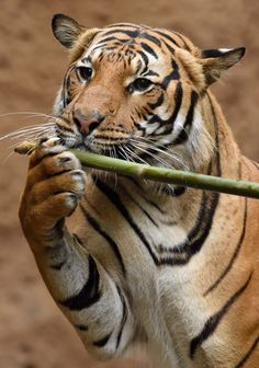 And now for the beautiful sounds of Connor on the bamboo flute. (pic: Debbie Beals)
