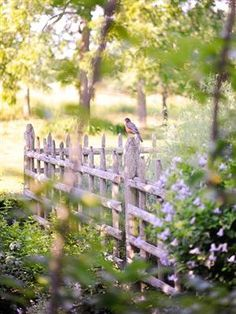 I don't know where this is, but this rustic little fence surrounded by foliage is lovely to me.  So peaceful and a little untamed too.