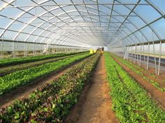 High Tunnel Farming Structure in Pakistan