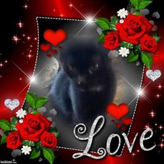 Beautiful late cat belonging to a friend R.I.P.