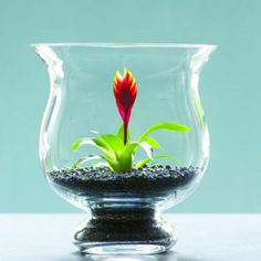 Plant a tiny cactus or bromeliad in a glass vase and you have an instant sculpture. The only additional materials you need are some polished stones and a small container.