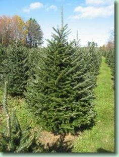 Werner's Christmas Tree Farm | Middlebury, VT