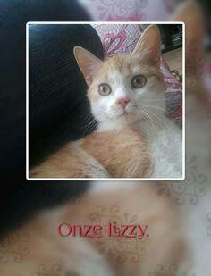 Lizzy, Kitten.
