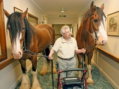 Residents at an Erina nursing home got a surprise when two draft horses and a cowboy popped in for a friendly neigh-bourhood visit.