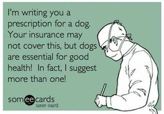 Funny Ecard about Dogs. Dogs are therapy. They may not be covered by your insurance plan, but they will cure depression, anxiety, and many other key factors to help you live a happy life. Quotes about dogs. I Love Dogs, Puppy Love, Cute Dogs, Funny Dogs, Awesome Dogs, Animals And Pets, Cute Animals, Funny Animals, Pekinese
