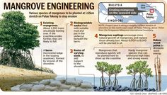Graphics illustrating how various species of mangroves will be planted at stretch on Pulau Tekong to stop erosion. Sewage Treatment, Mangrove Forest, Social Activities, Beautiful Ocean, Urban Farming, Science And Nature, Biodegradable Products, Conservation, Habitats