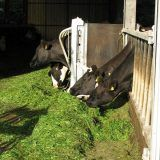 CowPow Moving Feed Barrier – Adlib Feeding